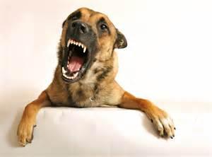 growling dog is trying to tell you something van venn