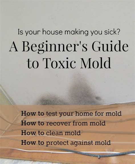 How Do You Detox From Mold by A Beginner S Guide To Toxic Mold Household Remedies And