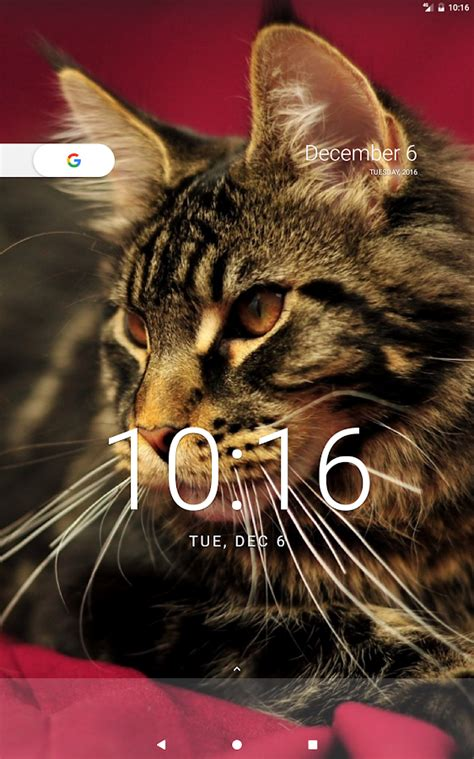 wallpaper cat for android cat wallpapers android apps on google play