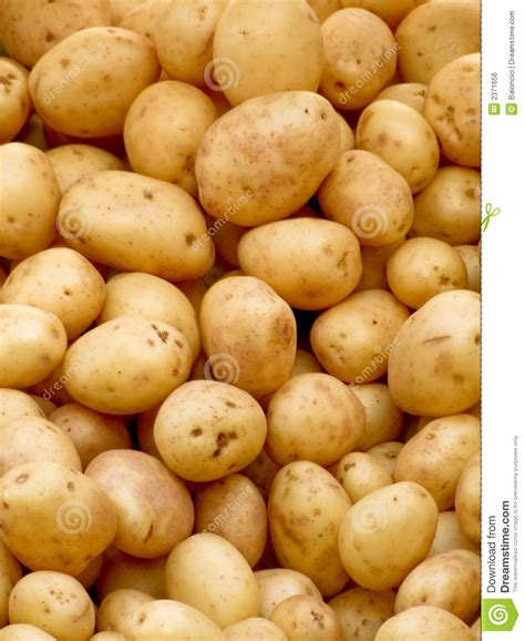 Potato Free by Organic Potatoes Royalty Free Stock Image Image 2371656