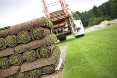 tappeto erboso a rotoli prato a rotoli giardini verdi
