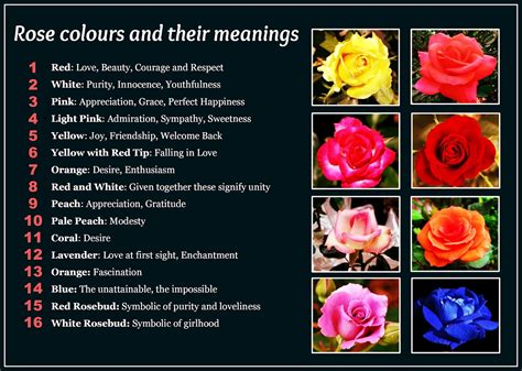 list of colours and their meanings daveswordsofwisdom com rose colors and their meanings