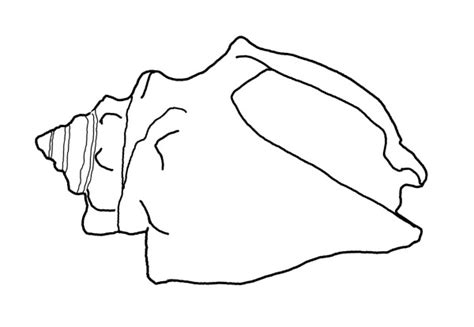 queen conch coloring page coloring pages shells and sand dollars starfish