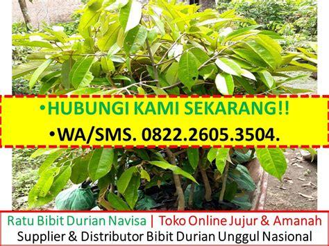 wa sms 0822 2605 3504 jual bibit durian bawor bekasi