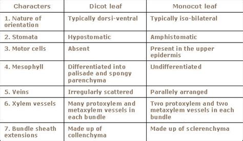 difference between monocot and dicot leaf cross section 6 best images of monocot and dicot chart difference