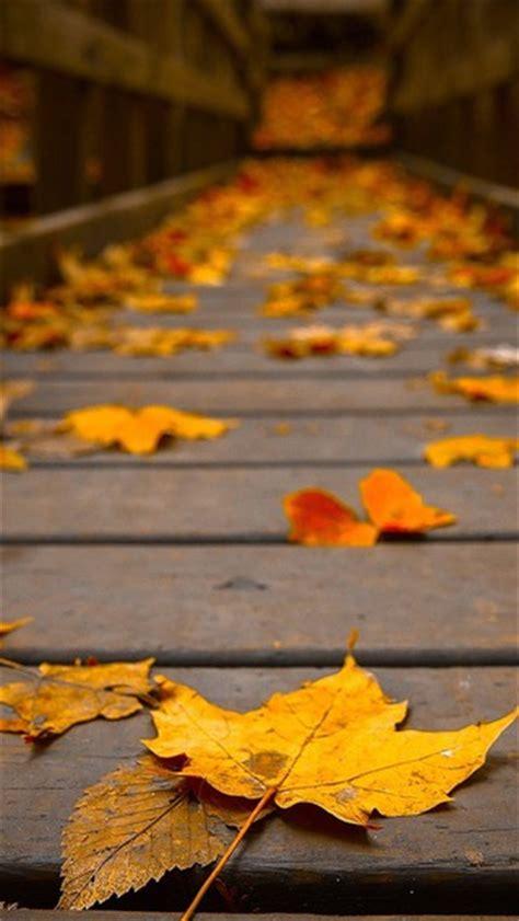 woods wooden bridge colors peaceful view autumn wallpaper