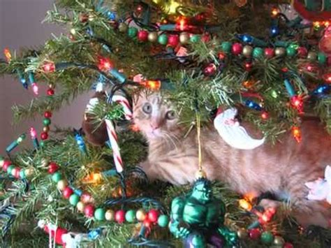 funny cats in christmas trees cats in trees