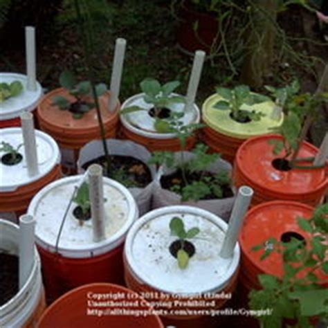 Vegetables and Fruit forum: Make an eBucket! (National
