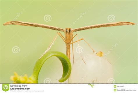 libro the natural world close up pterophoridae stock photo image 39976497
