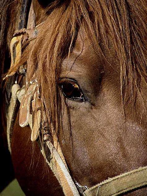 httpmujer folia con caballo quot caballo follando mujer quot quot relatos de caballos follando