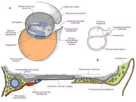 дыхательная система методичка гайворонский