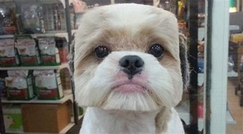 Dogs Rage Stupid Haircuts In Taiwan Are All The Rage And Need To Stop Asap Doggybnb