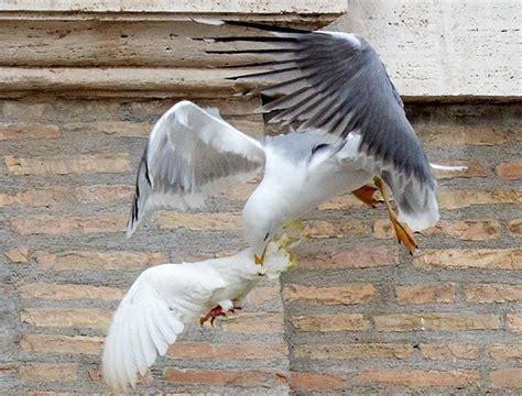 apertura alare gabbiano roma 195 168 un set di hitchcock e i killer sono tutti gabbiani
