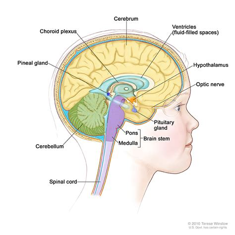 sections of the brain stem childhood central nervous system atypical teratoid