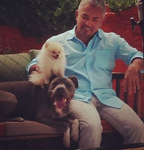 cesar millan pomeranian pin by ma on and junior the ambassadors of the pit bull