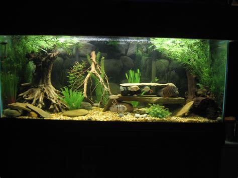 Best Low Light Aquarium Plants cichlids com tank examples sa ca 75 gallon cichlid