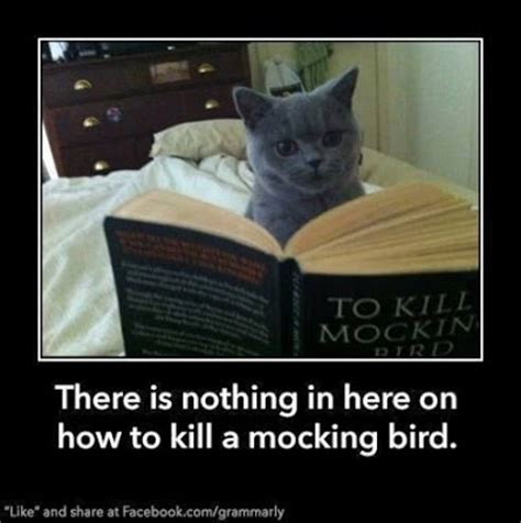 To Kill A Mockingbird Cat Meme - wounded bird alas