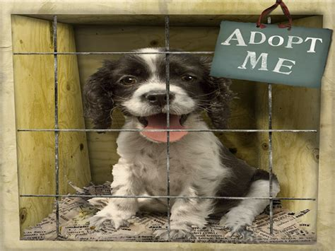 local adoption top 10 reasons to adopt from an animal shelter helping autos post