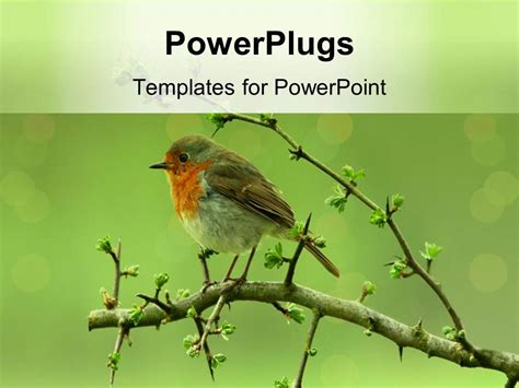 powerpoint themes birds powerpoint template a bird sitting on a branch of a tree