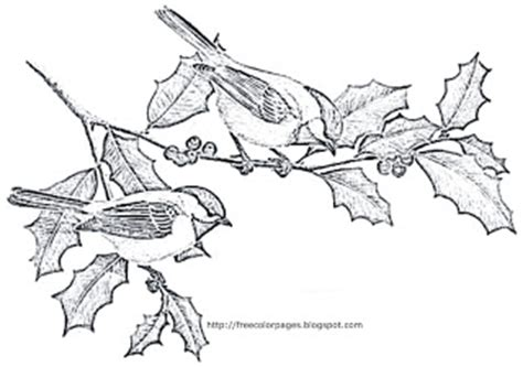 coloring pages black capped chickadee bird coloring pages