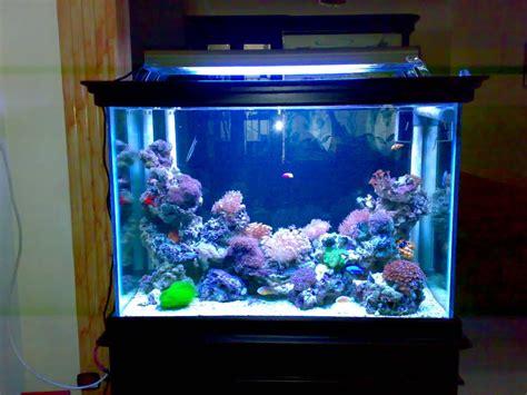 membuat filter aquarium laut gambar membuat aquarium sederhana mudah ikan hias bahan