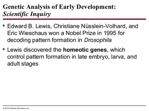 homeotic pattern formation biology in focus chapter 16