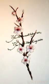 The beauty and delicate nature of a cherry
