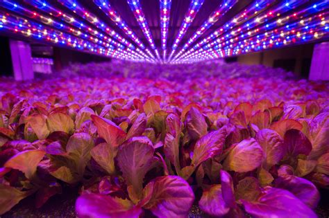 aerofarms aerofarms led lights indoor agriculture
