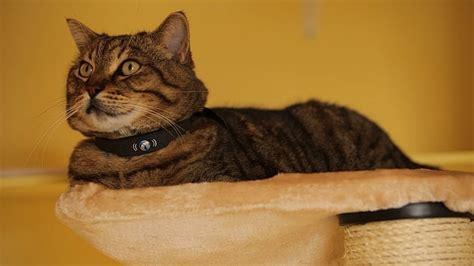 best pet tracker best gps pet tracker the world s gps cat collar