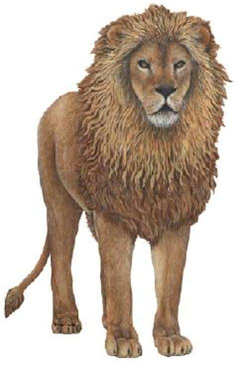 imagenes de leones misticos el rey de la selva contarcuentos com