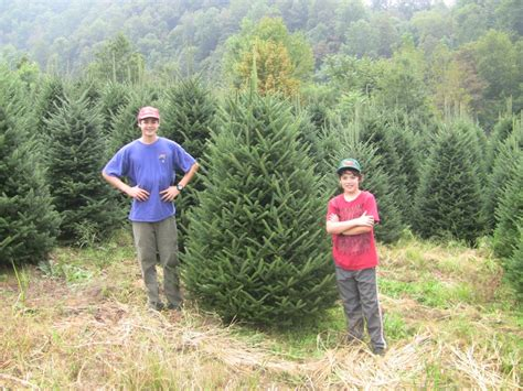 big john s christmas trees photo gallery