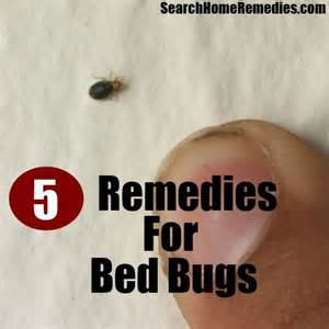 how to bed bugs home remedies 5 herbal remedies for bed bugs herbal remedies