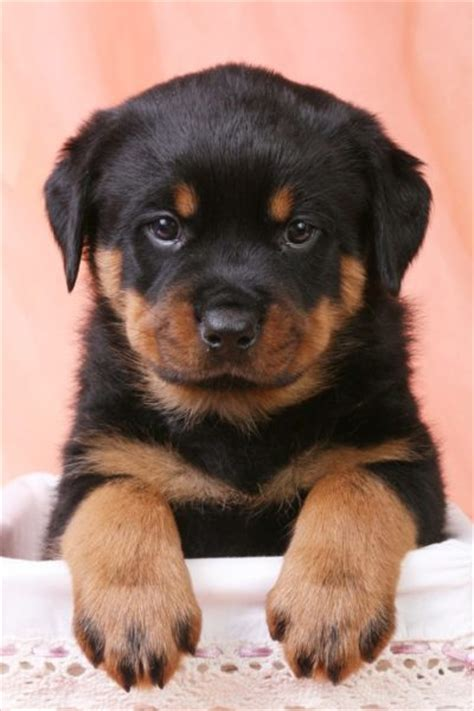cutest big breeds cutest big breeds pictures to pin on pinsdaddy