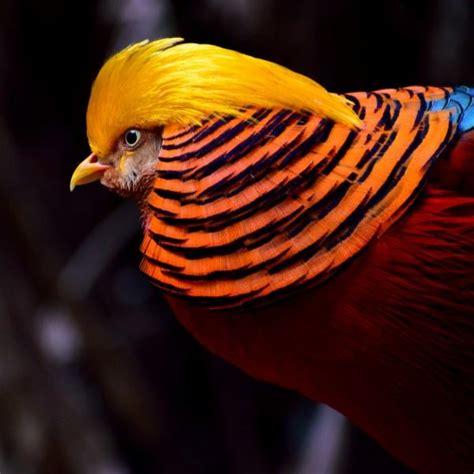 Imagenes Animales Exoticos Hermosos | los animales m 225 s ex 243 ticos del mundo