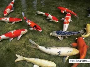 water gardens japan koi koi fish koi ponds beautiful