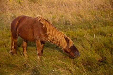 download image chincoteague pony and foal pc android iphone and ipad chincoteague pony stock image image of pony horse