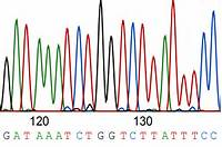 Sanger Sequencing How The Genome Was Won  Bitesize Bio