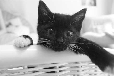 lettiere per gatti prezzi le 7 migliori lettiere per gatti economici 2018 prezzi e