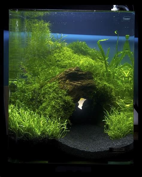 Aquascape Freshwater Aquarium And Fish For The Home Pinterest Aquascaping