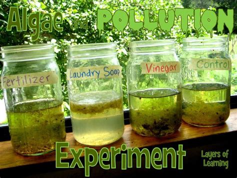 Algae And Pollution Secondary Science Teaching