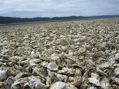 oyster beds washington road trip what do oysters and rvs have in common