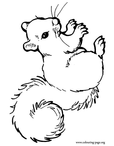 kleurplaat squirrel on a sunny day free printable squirrel template coloring home