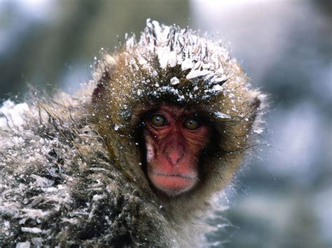 monkeys pictures funny monkey animal pictures