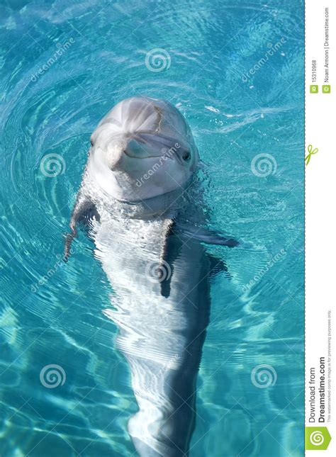 Bottle-nosed Dolphin Royalty Free Stock Photos - Image ...