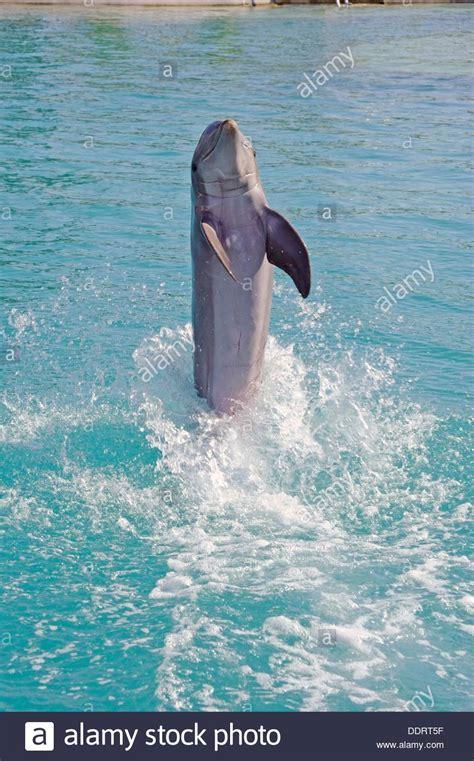 boatswain s adventure marine park the dolphins beach stock photos the dolphins beach stock
