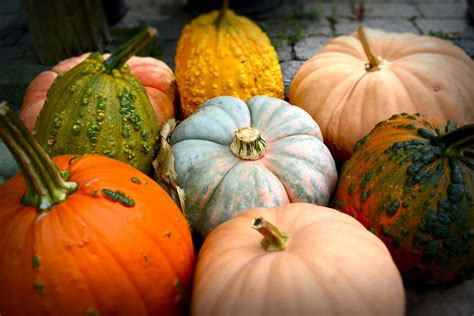 fall entertaining fall entertaining etiquette everything s coming up