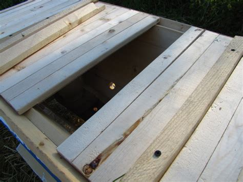 Golden Top Bar Hive by Installing A Package Into A Top Bar Hive