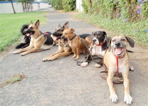 top 10 strongest dogs top 10 strongest breeds in the world the gazette review