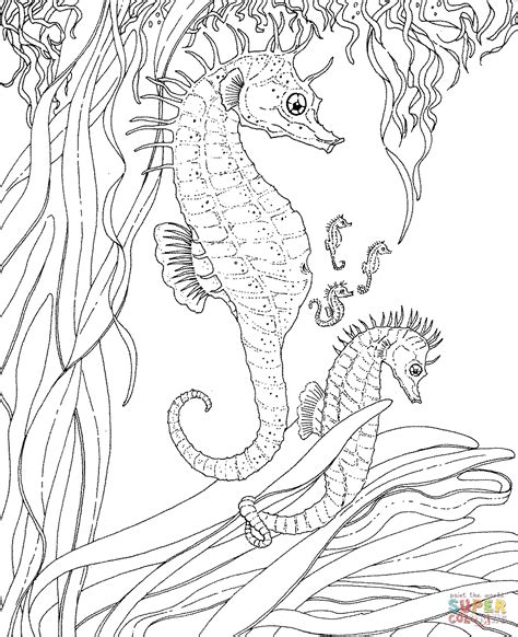 hard seahorse coloring pages adult seahorse and seahorse babies coloring page free