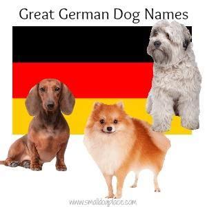 german names for dogs best german names